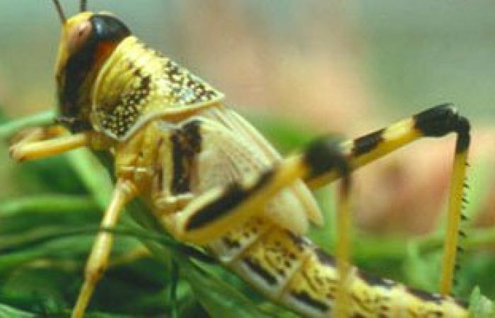 أسراب من الحشرات الطائرة تجتاح مدينة صيدا اللبنانية