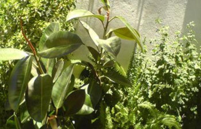اليوم.. معهد بحوث البساتين ينظم دورة تدريبية عن نباتات الزينة بأسوان
