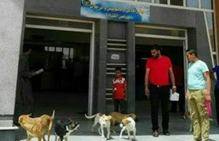 بالصور..كلاب ضالة داخل وحدة مرور برج العرب بالإسكندرية