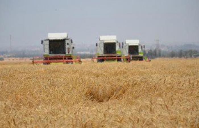 زراعة 45 ألف فدان بمحصول القمح و246 فدان قطن بمحافظة الإسماعيلية