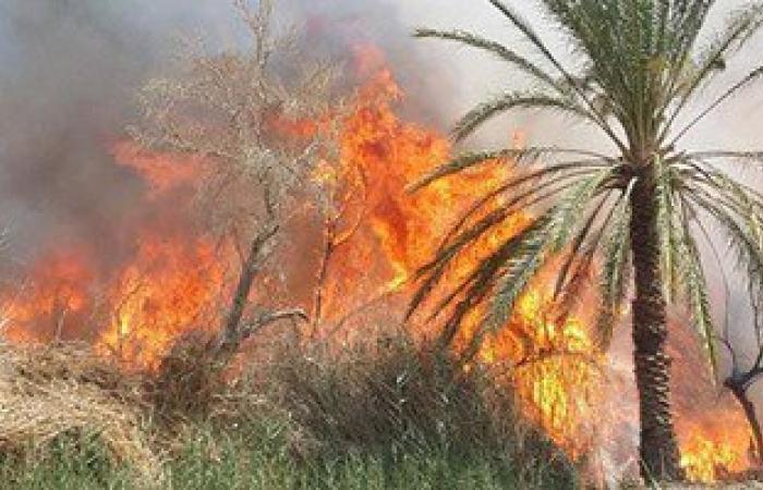 إخماد حريق نشب بأشجار نخيل فى إدفو بأسوان