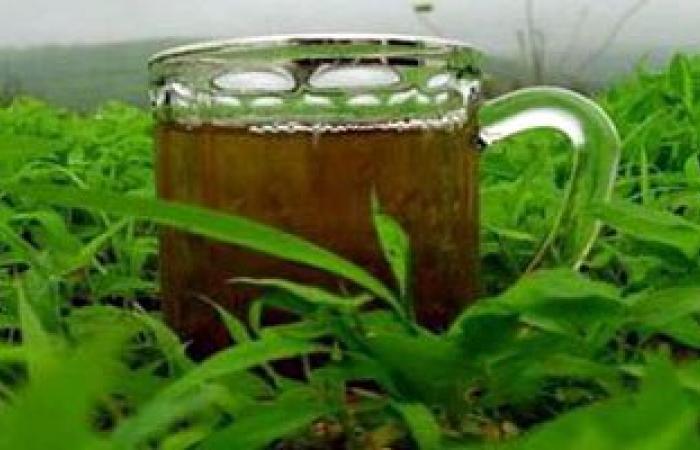 تطوير كريم جديد من الشاى الأخضر لعلاج علامات التمدد الجلدية
