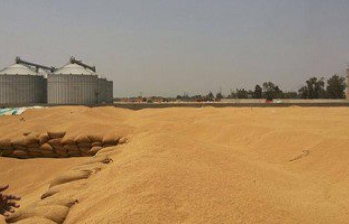 توريد 133 ألف طن قمح إلى الصوامع والشون بمحافظة سوهاج