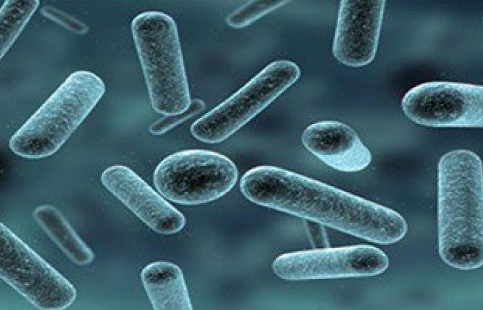 """ومن الجراثيم ما شفى.. باحثون يطورون """"فيروس"""" يعالج تليف الكبد"""