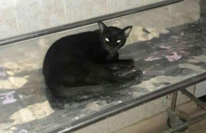 بالصور.. انتشار القطط بمستشفى حميات أبو المطامير فى البحيرة