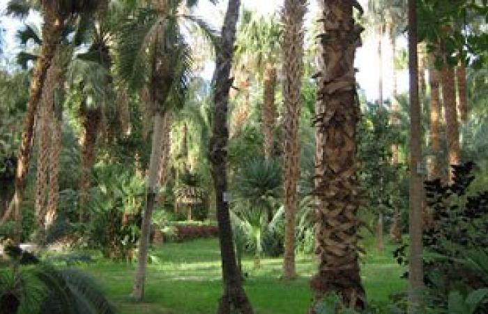 الحديقة النباتية بأسوان تستقبل 600 زائر فى الساعات الأولى لثانى أيام العيد