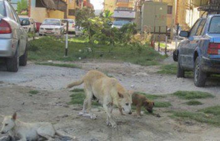 بالصور.. الكلاب المسعورة تثير ذعر أطفال حى المناخ فى بورسعيد