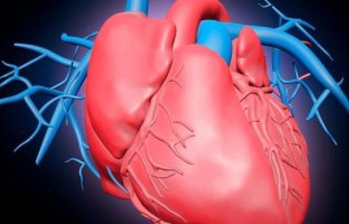 دراسة: الماغنيسيوم البحرى يقى من أمراض القلب