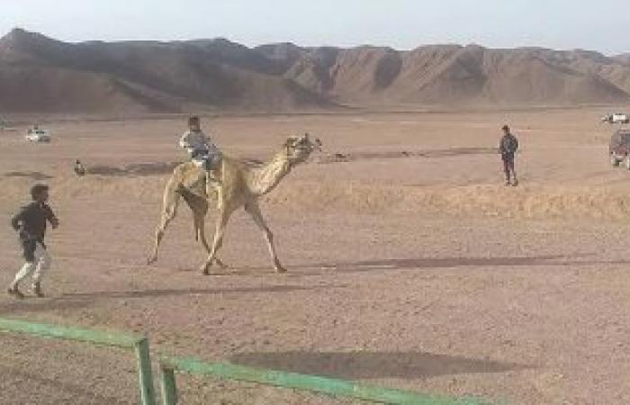 انطلاق سباق الهجن بطور سيناء