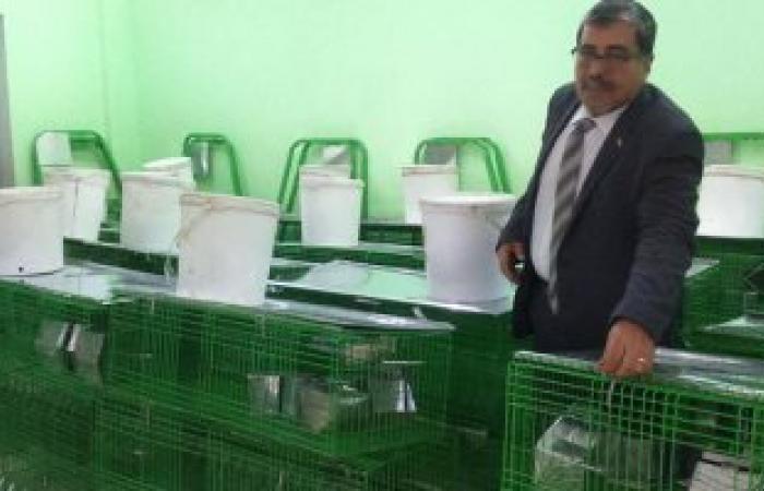 """""""زراعة"""" شمال سيناء: توزيع 20 بطارية إنتاج أرانب على الأسر بالعريش"""