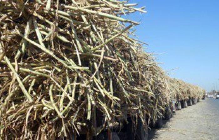 مزارعو قصب السكر بقنا يطلبون لقاء النواب لمناقشة أزمة التوريد