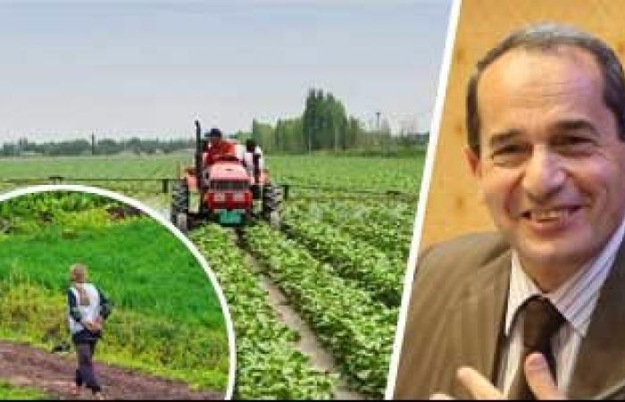 """""""الزراعة"""": تطوير 9 محطات بحثية بسيناء وتوشكى لتنمية المناطق الحدودية"""