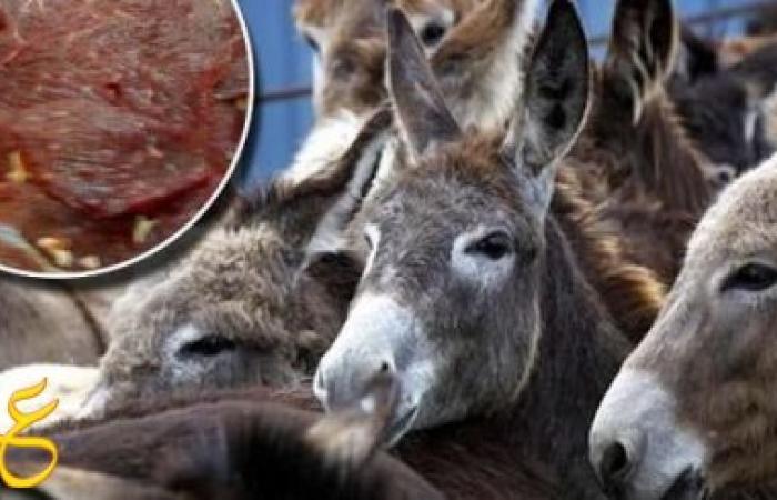 """ضبط 1600 كيلو لحم """"حمير"""" قبل توزيعها على المطاعم"""