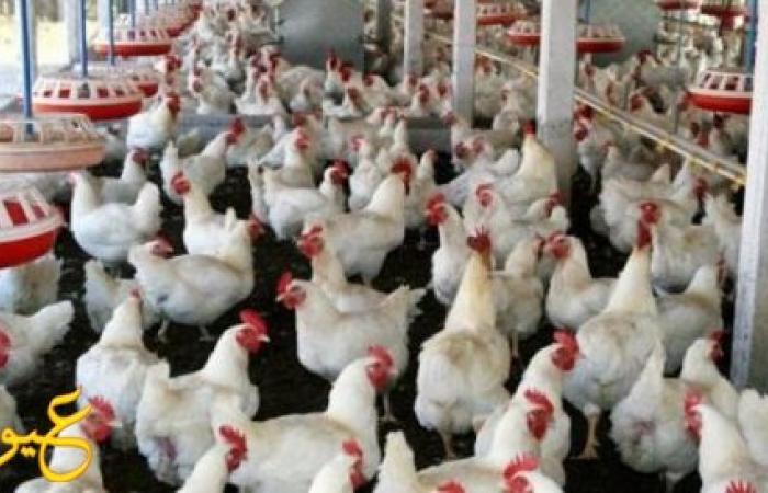 ارتفاع جنوني في أسعار اللحوم والدجاج و البهارات