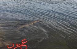 بالصور.. ظهور تمساح بالنيل في أسوان.. والمحميات: اللقطات في هذه المنطقة