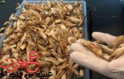 بالصور..باحثون مصريون يحولون قشر الجمبرى إلى مادة بلاستيكية قابلة للتحلل