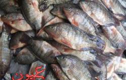 ارتفاع غير متوقع لأسعار الأسماك اليوم الأربعاء.. ننشر سعر جميع أنواع السمك الآن