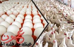 أسعار الدواجن والبيض تواصل الانخفاض اليوم.. تعرف على سعر كيلو الدواجن البيضاء والبلدي والساسو الآن
