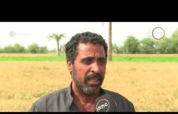 مساء dmc - | بدء توريد القمح من المزارعين .. اعتراضات من الفلاحين على سعر توريد القمح |