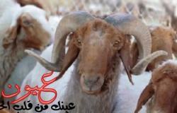 قبل العيد.. اعرف أهم علامات المرض على الحيوان قبل ذبحه