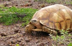 الحكومة توضح حقيقة تخفيض ضريبة المبيعات على الزواحف و السلاحف باعتبارها سلع اساسية
