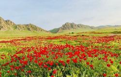 صور من الجمال الإيزيدي المقدس في العراق