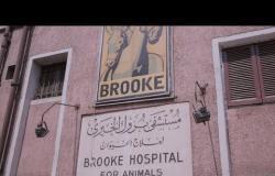 """""""بروك"""".. أقدم مستشفى خيري لعلاج الخيول في مصر"""