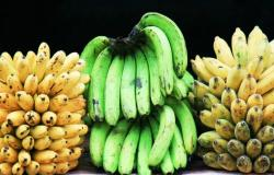 هل ستساعد تقنيات التعديل الوراثي في إنقاذ الموز من الانقراض؟