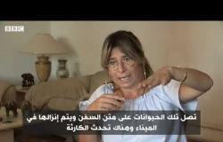 تعذيب الجمال بسوق برقاش المصري