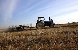 مؤسسة الحبوب: شراء 10% من احتياجات القمح من شركات سعودية بالخارج