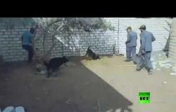 عملية نوعية لأجهزة الأمن بصعيد مصر تستهدف خصومة ثأرية بين عائلتين
