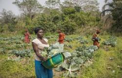 العالم يهدر أغذية بقيمة 400 مليار دولار قبل البيع بالتجزئة