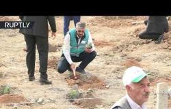 غرس 11 مليون شجرة في آن واحد بتركيا!