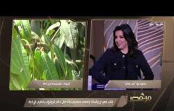 """من مصر   """"الموضوع بدأ من خلال ابني"""".. رحلة الدكتور محمد مع اليوتيوب وفيديوهات الزراعة"""