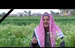 مساء dmc - قرية أبو مليح ببني سويف.. تتربع على عرش تصدير النباتات الطبية والعطرية في مصر