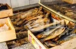 ضبط سلع غذائية وأسماك مجهولة المصدر بالشرقية