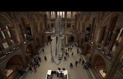 جولة افتراضية في متحف العلوم الطبيعية في لندن!