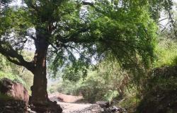 """بعد الأمطار .. سكان """"وادي قرسان"""" يطالبون بإنهاء معاناتهم مع طريق ترابي"""
