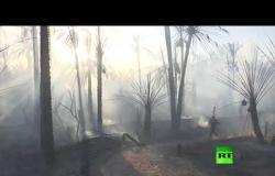 حريق في غابة النخيل في ولاية ورقلة في الجزائر