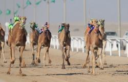 """""""بنت السنافي"""" و""""الهلالية"""" تحققان الأفضلية في سباقات الهجن بـ""""النعيرية"""""""