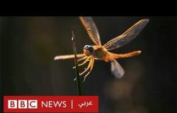 باحث مصري: اهتزاز الحشرات قد يلهم الجيوش بابتكار وسائل جديدة للتجسس