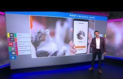 ما الذي تقوله القطط؟ تطبيق جديد لترجمة المواء إلى كلمات