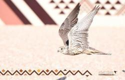 """مهرجان الملك عبدالعزيز للصقور يعزز دور المملكة في التوازن البيئي عبر """"برنامج هدد"""""""