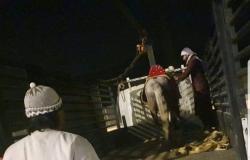 مصادرة الخيول والألعاب الهوائية بحجز جنوب مكة الفرعية