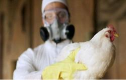 هل يمكن تفشّي إنفلونزا الطيور بين البشر؟.. الصحة العالمية تحسم الأمر