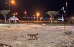 """بعد مقتل """"شهد"""".. شاهد كلاباً مسعورة تقاسم أطفال """"رخ العارضة"""" ألعابهم"""