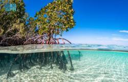 مشروع البحر الأحمر يقدم أنموذجًا عالميًّا في إنتاج المياه باستخدام الطاقة المتجددة