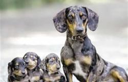 أمريكا توقف استيراد الكلاب من 113 دولة من بينها السعودية والأردن 