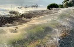 عناكب تجتاح ولاية أسترالية وتغطيها بشبكات عنكبوتية (فيديو وصور)