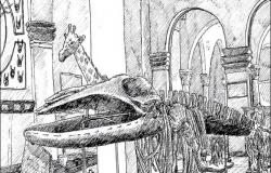 متاحفنا المنسية: «من فات قديمه تاه»